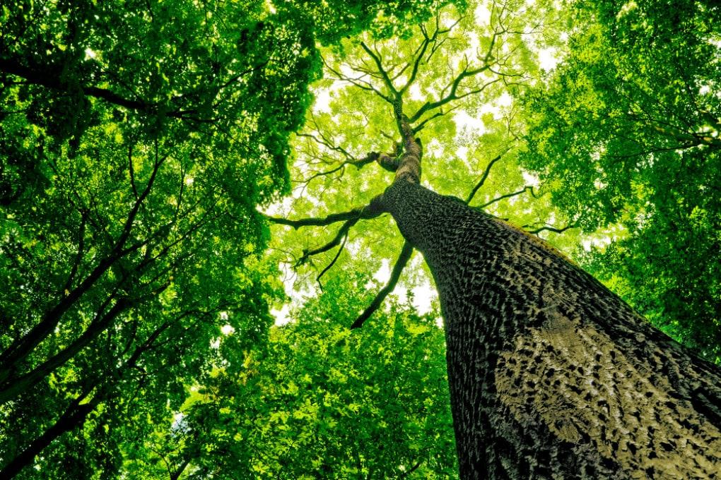 Il cambiamento climatico modifica le condizioni degli ecosistemi: dalla vegetazione attuale si potrebbe arrivare a specie diverse.