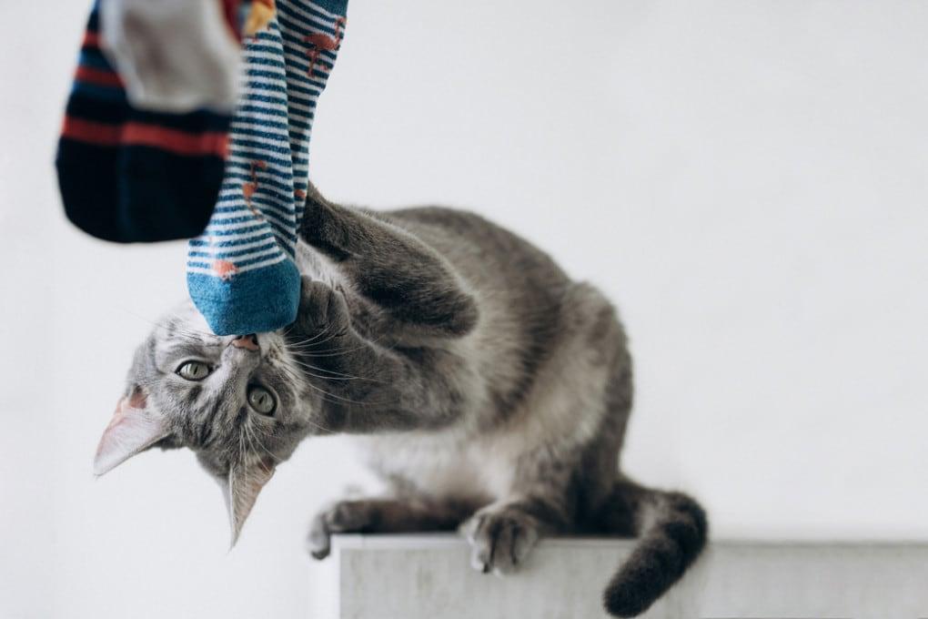 Siete sicuri che il vostro gatto non soffra perché non siete a casa?