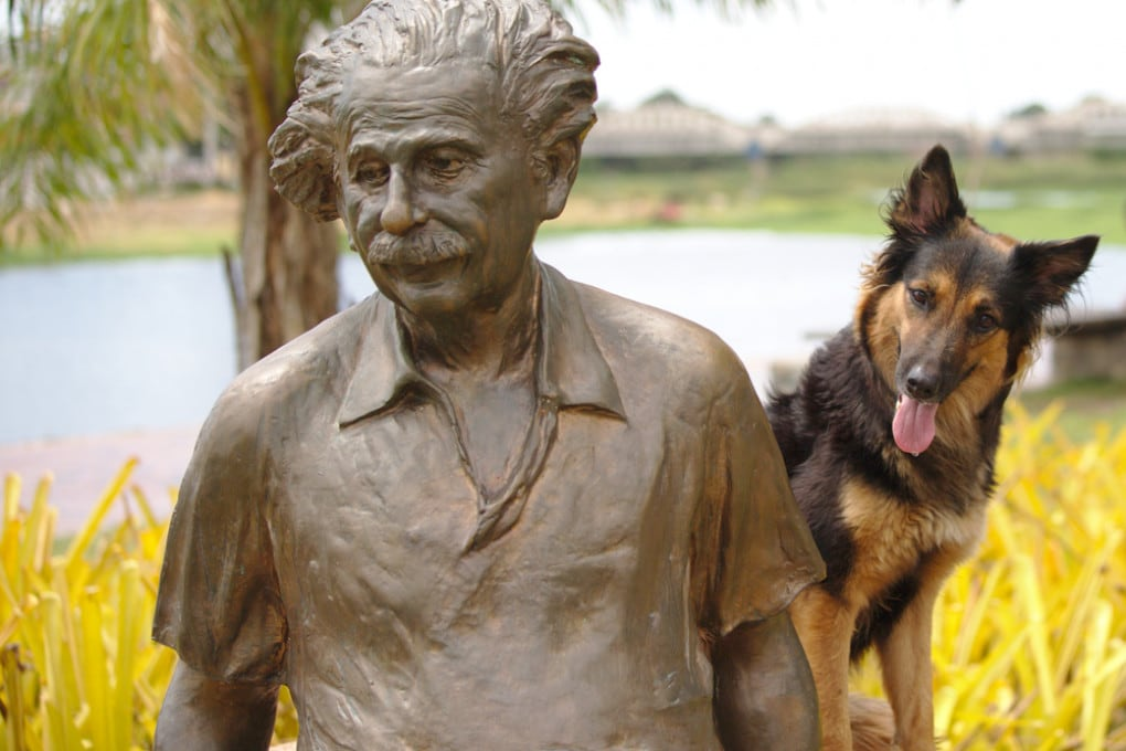 Il vostro cane è abbastanza intelligente da superare la Genius Dog Challenge?