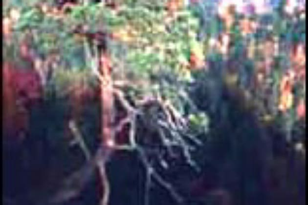 Perché un albero cresce verso l'alto e non perpendicolare al pendio?
