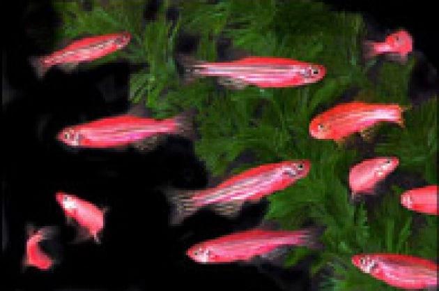 Anche i pesci rossi brillano for Vasca x pesci rossi
