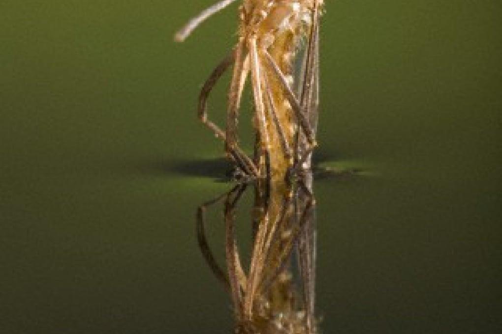 La fisica della zanzara