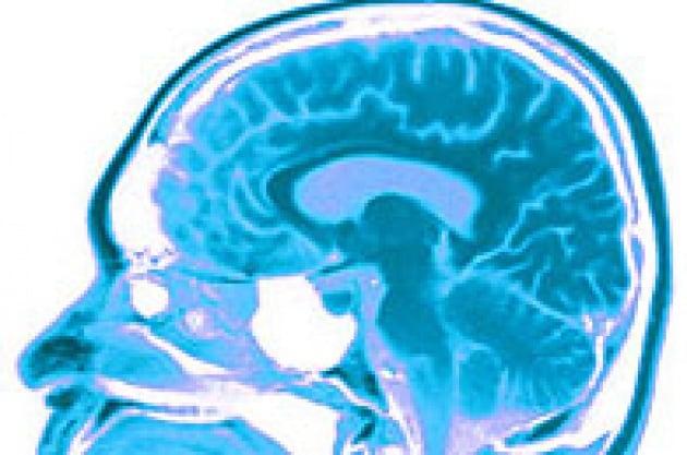 L'altruismo parte dal cervello