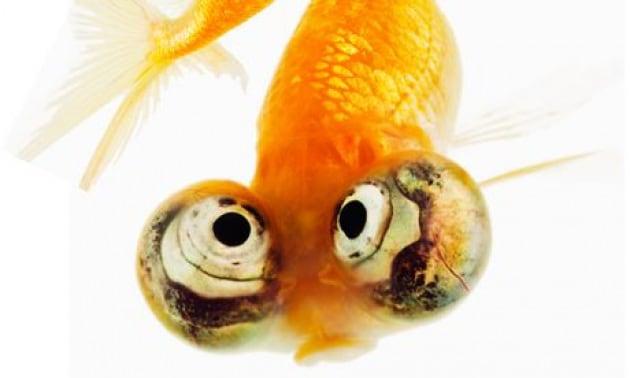 Come vedono gli animali marini?