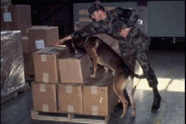 Come sono addestrati i cani antidroga?