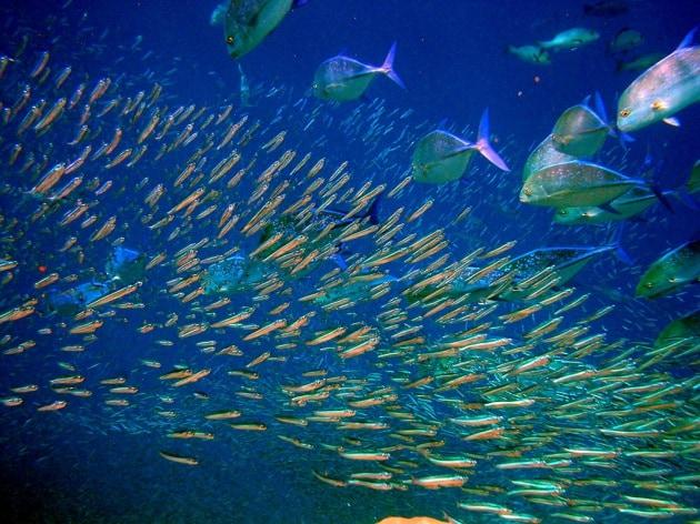 Sale il riscaldamento globale e i pesci si restringono