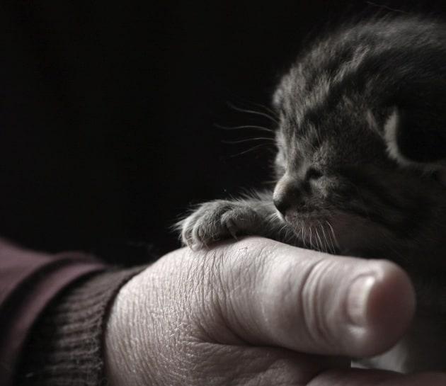 Come è meglio accudire un gattino rimasto orfano?