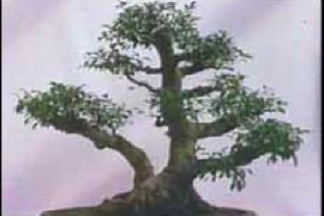 Quando e da chi sono stati inventati i bonsai?