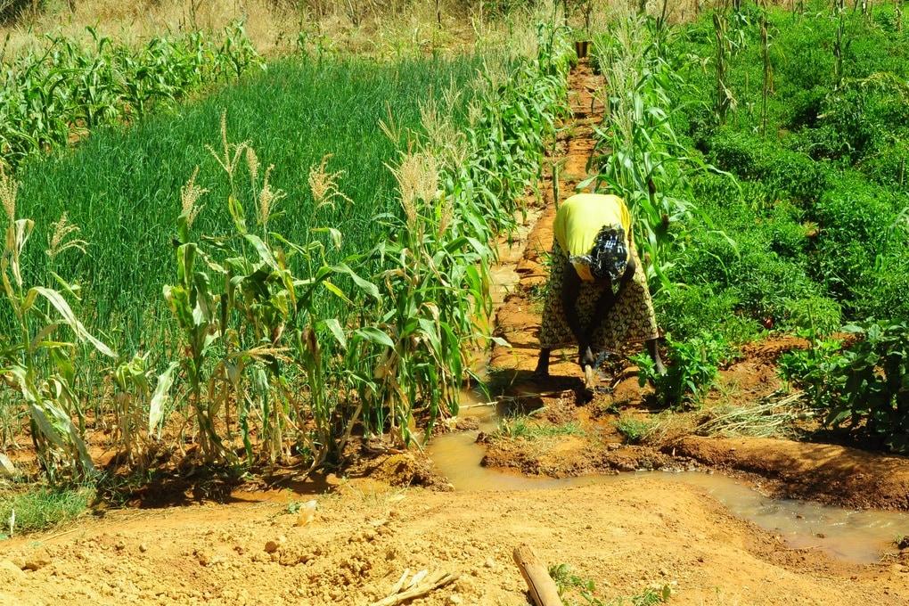 Giornata Mondiale dell'Alimentazione, i numeri della fame nel mondo