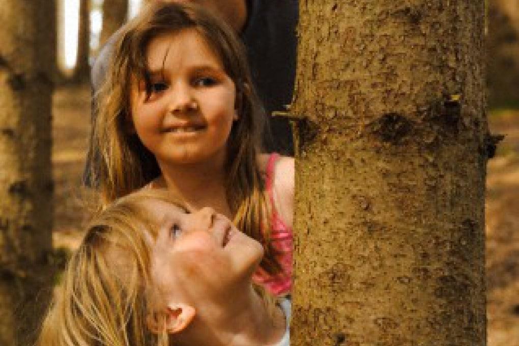 Qual è l'albero vivente più vecchio del mondo?