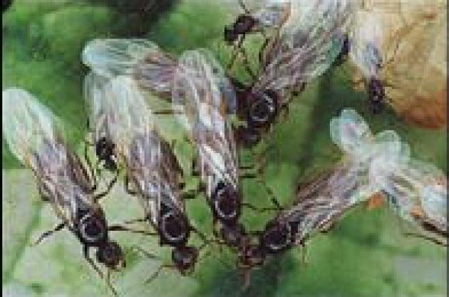 Eau de formica