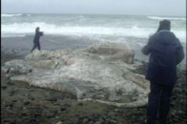 Un  mostro marino misterioso