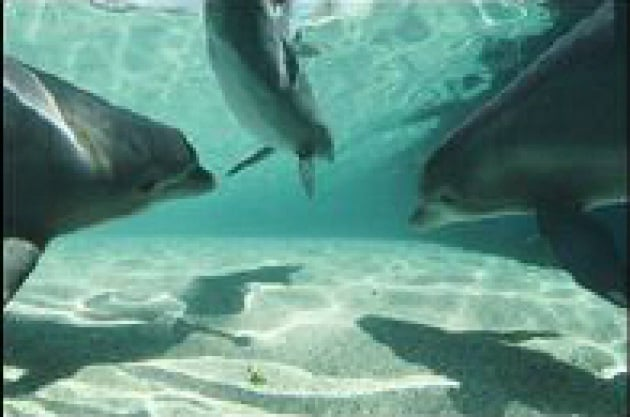 Delfini e jazzisti; è un piccolo mondo