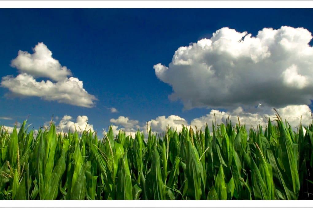 Che cos'è il biodiesel?