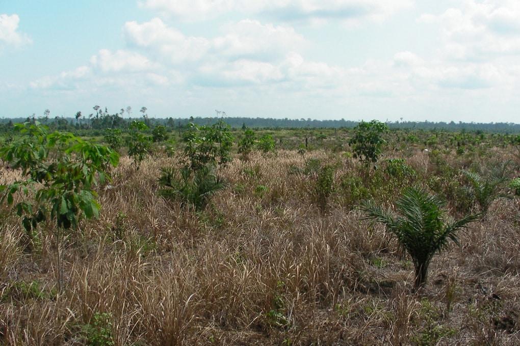 Lo sguardo vigile dei satelliti sulle foreste in pericolo