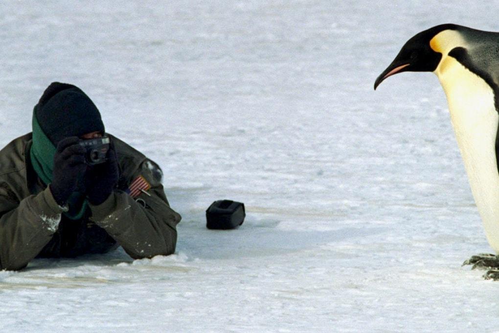 Come fa il pinguino imperatore a resistere al gelo?