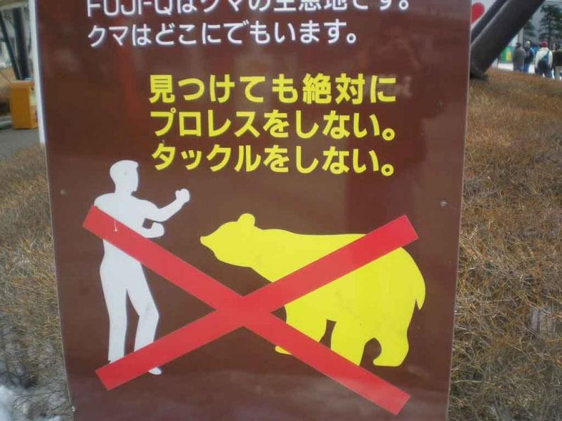 pungi-con-orsi