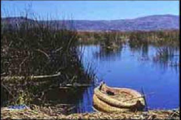 Come sono arrivati i pesci nel lago Titicaca?