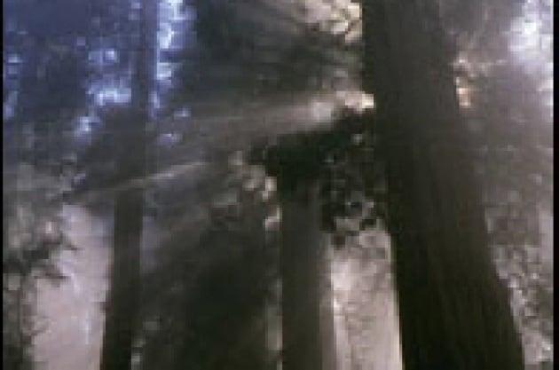 Anche gli alberi più alti hanno un limite