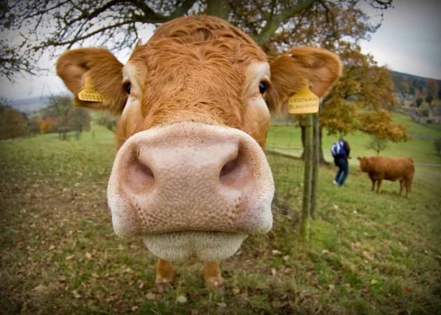 Case Di Mattoni Di Fango : Mattoni ecologici dagli escrementi di mucca focus