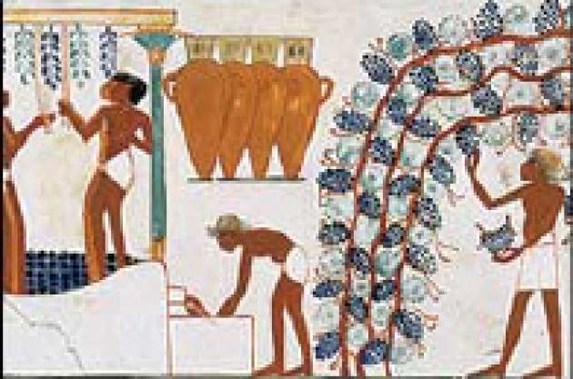 La storia del mondo in un bicchiere di vino