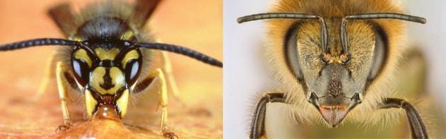 api-vespe