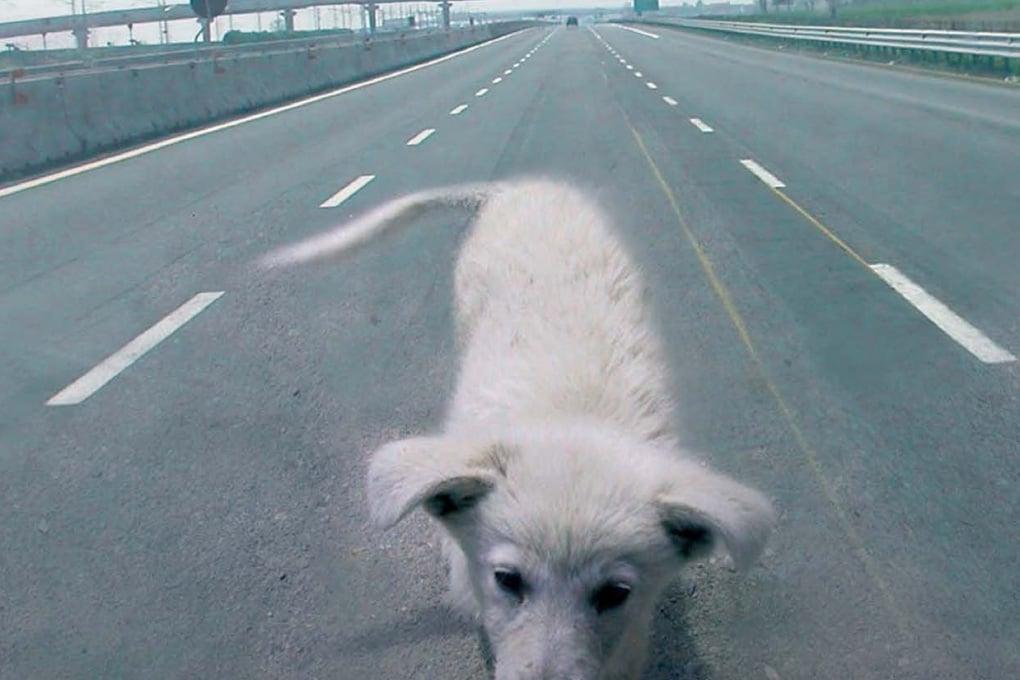 Che cosa fare quando si trova un cane o un gatto abbandonato