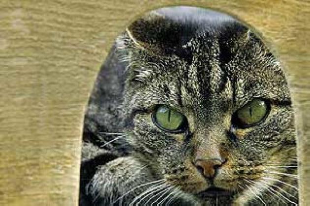 Il gatto uno dei migliori amici dell 39 uomo for Allontanare i gatti