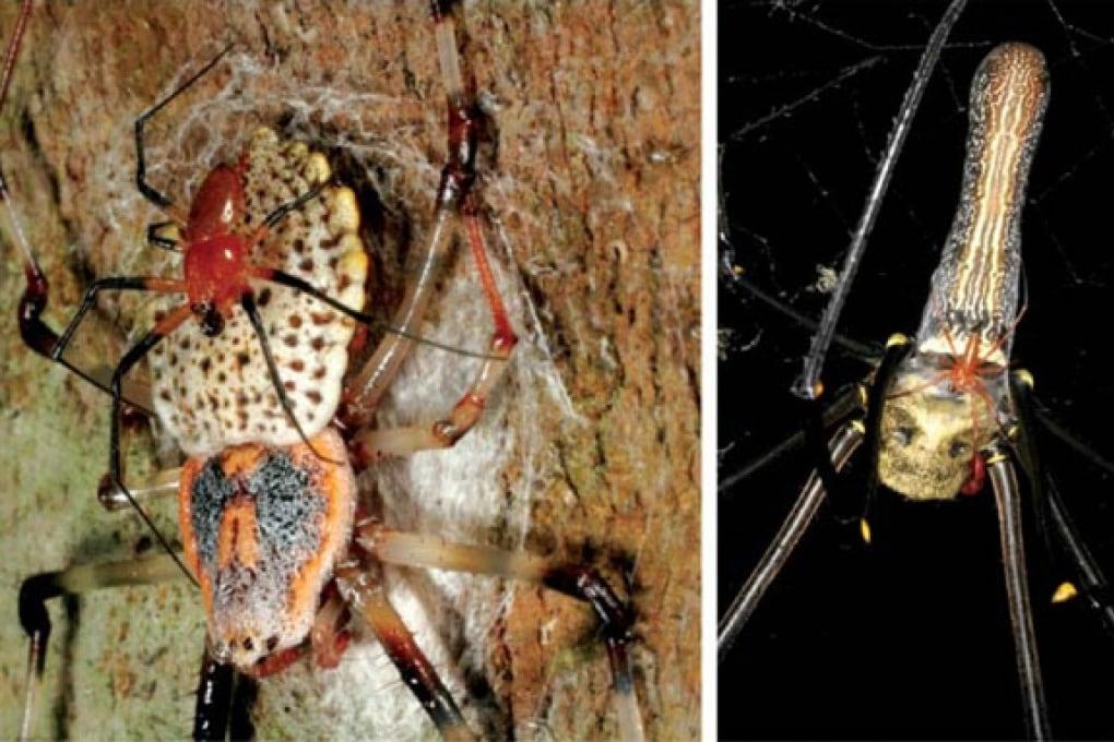 Ecco il ragno più grande del mondo