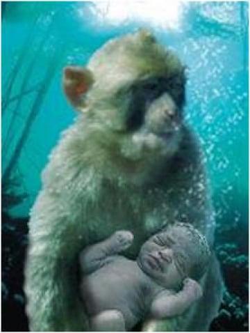 Siamo figli di scimmie. Acquatiche