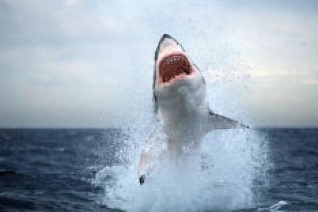 Io gioco con gli squali