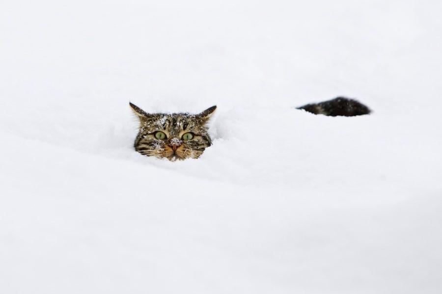 Peloso nero dilettante micio