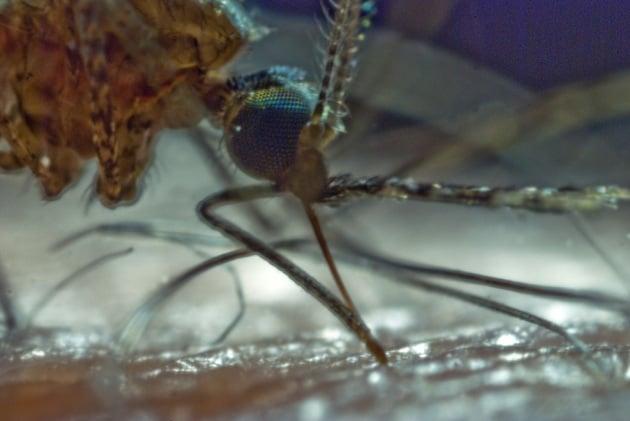 Il vaccino della malaria potrebbe salvare dal contagio centinaia di migliaia di bambini