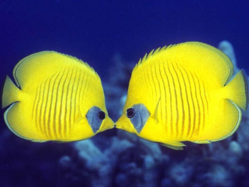 Baci come darli e mille altre curiosit scientifiche for Cibo per pesci tropicali