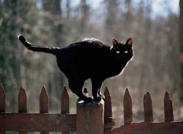 Copia di: Le più belle foto di gatti
