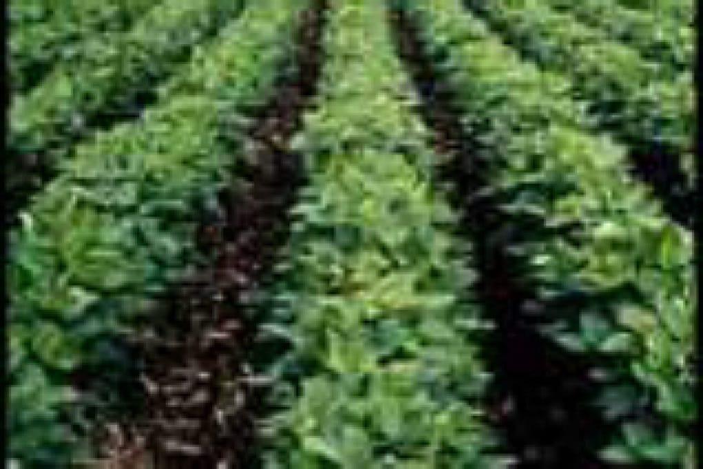 Come si modifica una pianta geneticamente?