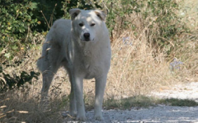 Come fanno cani e gatti a ritrovare la strada di casa?