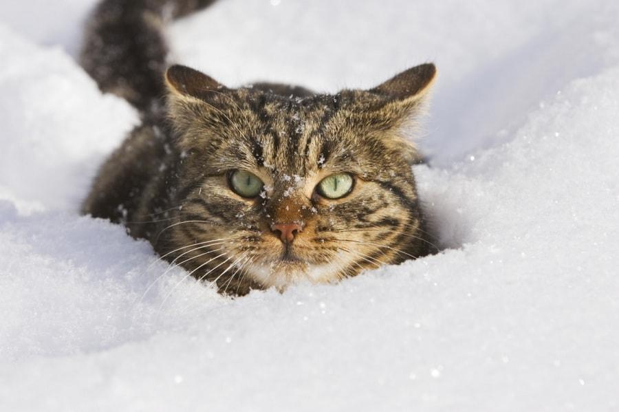 Animali nella neve le foto pi belle for Foto spettacolari per desktop