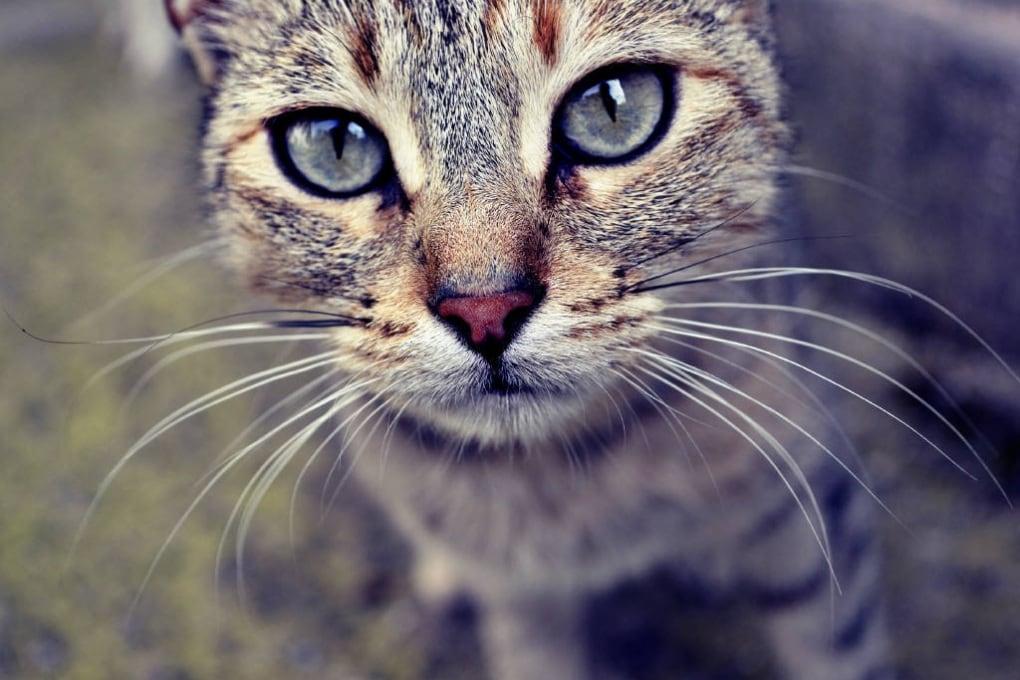 Se il gatto di casa starnutisce, può contagiarci?