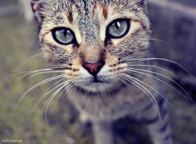 Se il gatto di casa starnutisce pu contagiarci for Gatto che starnutisce