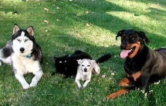 Perché ci sono così tante razze di cani?