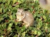 scoiattolo_64k