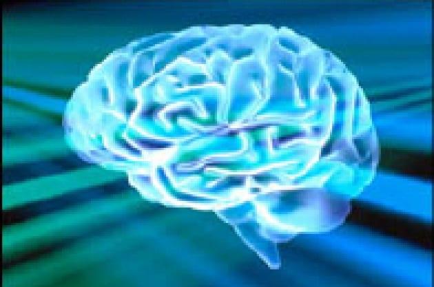 Il sesso nei cervelli
