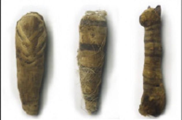 La mummia gatto