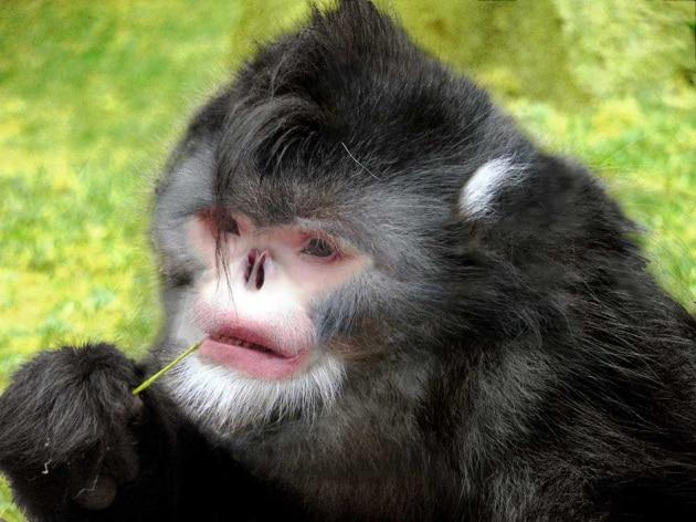 Le 10 nuove specie più pazze del mondo