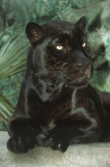 La naturale eleganza del nero