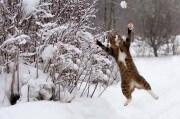 gattos
