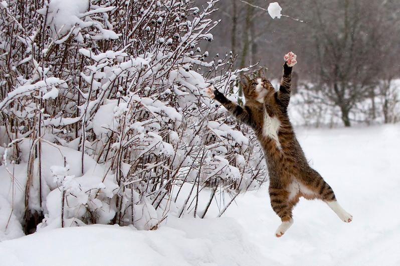 Animali nella neve le foto pi belle - Colorazione immagine di un cane ...
