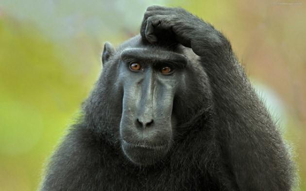 monkey-thinking-4092