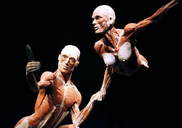 Corpo umano: curiosità, foto, numeri